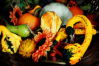 Autumn Harvest *this is a digital painting